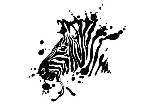 Zebra isolated on white background. Vector grunge illustration design template.