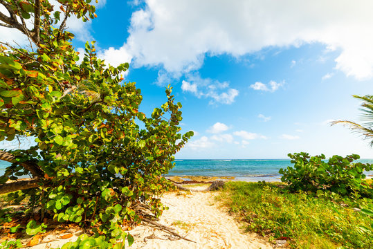 Green plants in Autre Bord beach in Guadeloupe