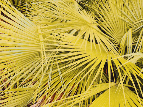 Close up view of palm leaves