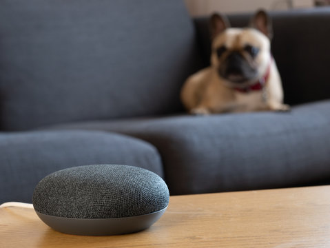 smart home speaker device voice activated with dog in living room lounge