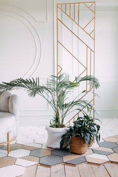 Dried flowers and vegetation in a modern interior. Interior decor in eco-style with greenery.