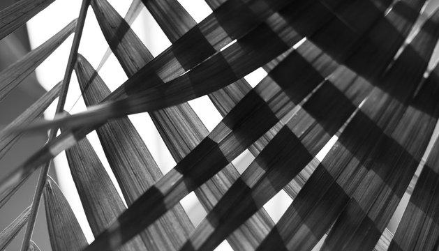 Palm leaf. Tropical plants. Nature background.