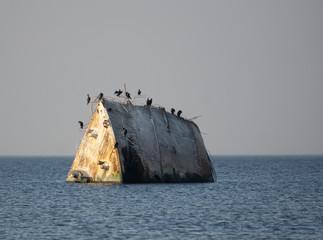 Acrylic Prints Shipwreck sunken ship in the sea with birds
