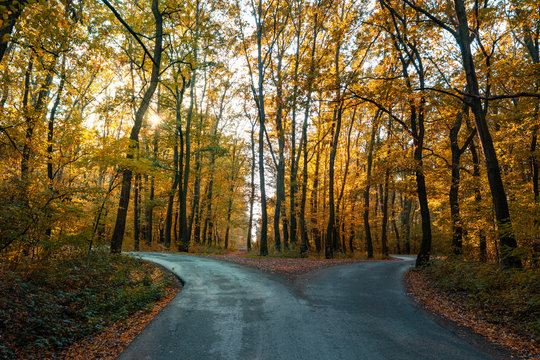 road goes two ways directions in a beautiful autumn forest symbol of making a decision