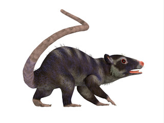 Purgatorius Primate Tail - Purgatorius was a proto-primate that lived in Montana, North America during the Cretaceous Period.