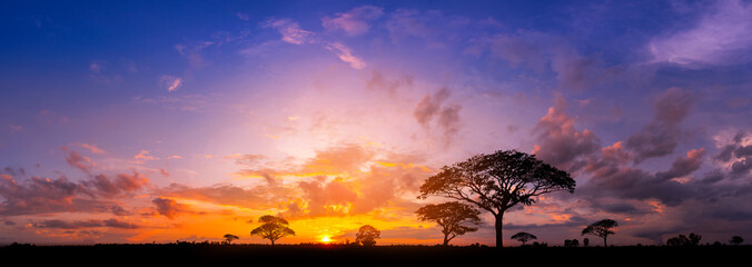 Panorama silhouette tree in africa with sunset.Tree silhouetted against a setting sun.Dark tree on...