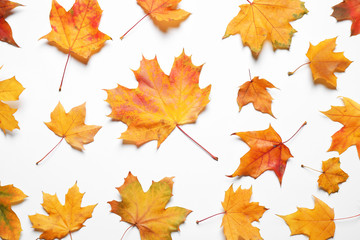 Flat lay composition with autumn leaves on white background Wall mural
