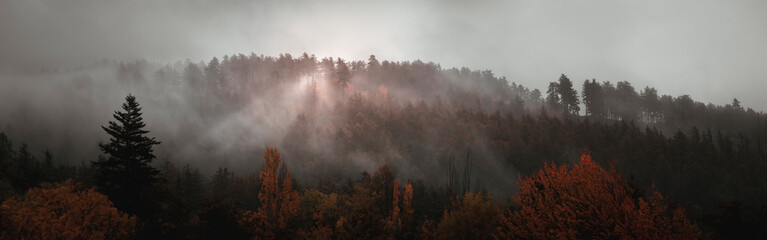 Printed kitchen splashbacks Gray traffic Après la pluie, la brume exhale les effluves de la foret automnale - After the rain, the mist exhales the fragrance of the autumnal forest