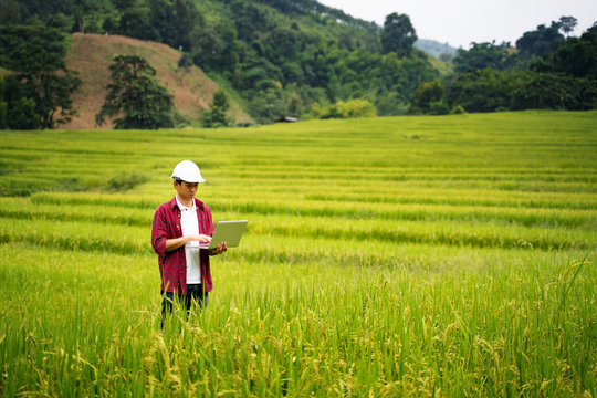 Asian man Agricultural Engineer Test Plants Health and Analyze Data with Tablet laptop in Industrial Greenhouse.Farmer Plantation checking quality by digital agriculture modern technology Concept.
