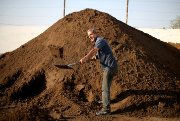 Palestinian man shovels olive pomace that is obtained from the olive oil extraction process and used as an energy source, at an olive press factory in the southern Gaza Strip