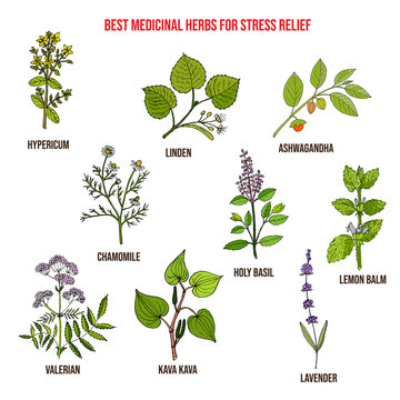Best medicinal herbs for stress relief