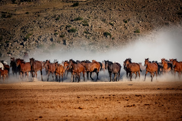 wild horses running in the plain