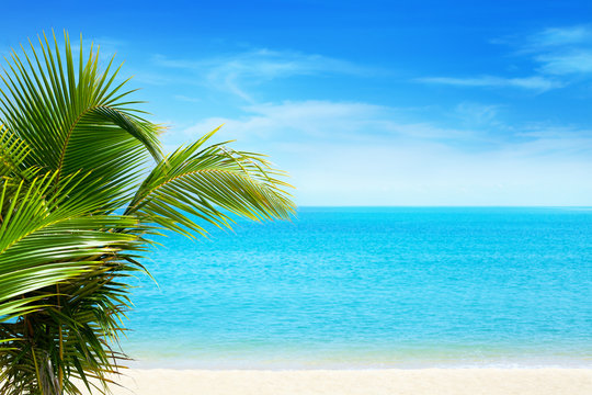 Beautiful white sand beach, blue sea water, clouds background, green palm tree leaves close up, vacation on exotic tropical paradise island concept, hot summer holiday relax, travel banner, copy space