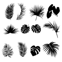 Tropical black palm leaves silhouettes isolated on white background, vector