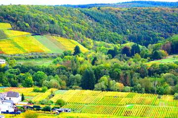 Wall Murals Vineyard Herbt im Ahrtal bei Bad NEuenahr-Ahrweiler