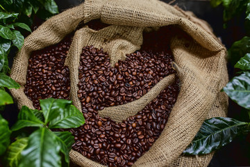 Open bag with coffee beans slices of green leaves. beautiful light, vigor of coffee beans, among...