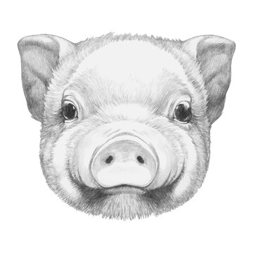 Portrait of Piggy. Hand drawn illustration. Vector isolated elements.