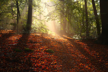 Beautiful sunbeams appearing in an open place in a forest in autumn, when the sun appears suddenly after rainfall
