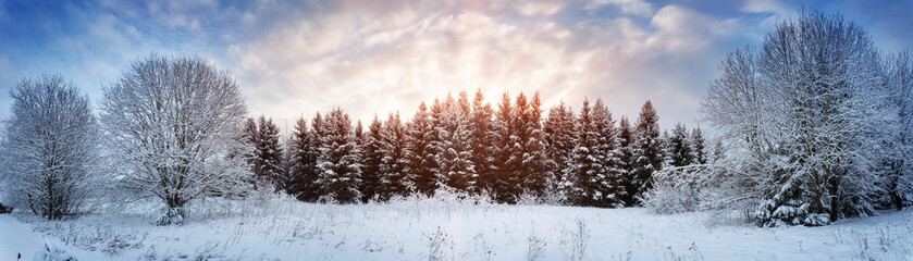 Wall Mural - Pine trees in winter landscape at sunset