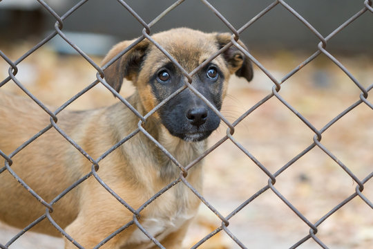 Portrait of a puppy in an animal shelter