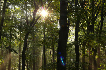 Beautiful sunbeams after rainfall in October in a beech forest, also some beautiful colors of lens flare created by the photocamera