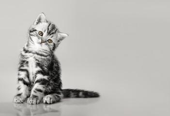 one grey stripy beautiful little kitten