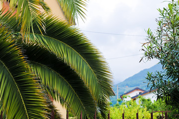 Fotomurales - Palm tree and mountain in background.