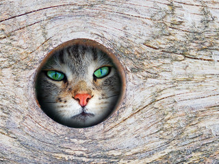 Cat looks through a hole in a tree