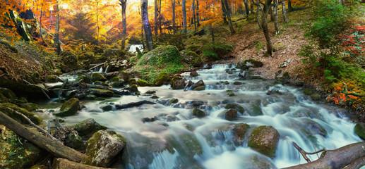 Photo sur Aluminium Rivière de la forêt forest waterfall