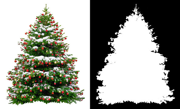 Christmas snowy tree decorated with red balls isolated on white background. Black and white mask of Christmas tree