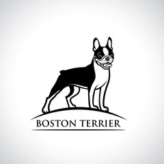 Boston terrier dog - isolated outlined vector illustration