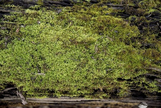 Closeup shot of rocks with moss growing on it
