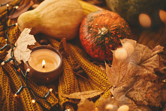 Cozy autumn atmospheric image. Happy Thanksgiving. Pumpkins with candle, lights bokeh ,autumn leaves, corn, nuts , cinnamon and dried berries on yellow knitted sweater on rustic table.
