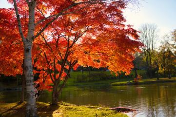 Fotorollo Wasserfalle 清水公園の紅葉
