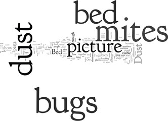 bed bugs and dust mites picture