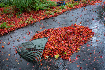 Pile of wet leaves and a rake on an asphalt driveway, garden in background, fall cleanup