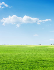 green grass agriculture field and blue sky with clouds over it