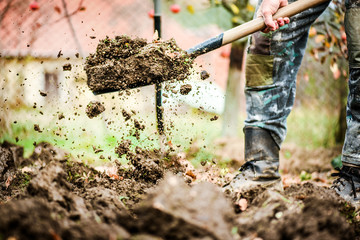 Worker digs soil with shovel in colorfull garden, workers loosen black dirt at farm, agriculture concept autumn detail. Man boot or shoe on spade prepare for digging...
