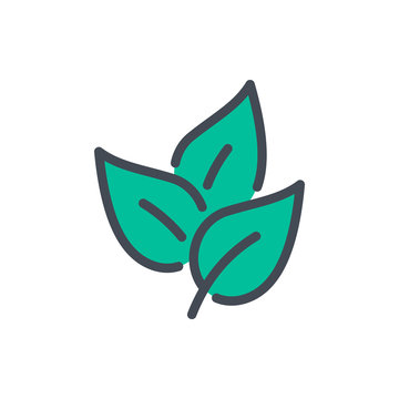 Tea leaves color line icon. Bunch of leaves vector outline colorful sign.