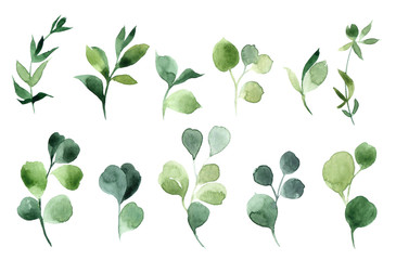 Hand drawn watercolor illustration of abstract green branch. Elements for design of invitations, movie posters, fabrics and other objects, isolated on white background Wall mural
