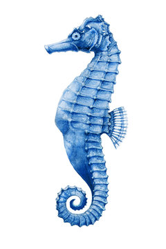 A sea-horse bright watercolor illustration. Hand drawn small tropical seahorse fish - aquarium colorful creature, isolated on white background.