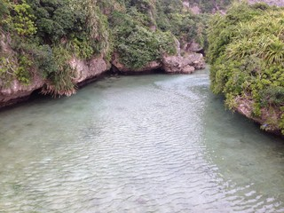 River in the Tropical Forest