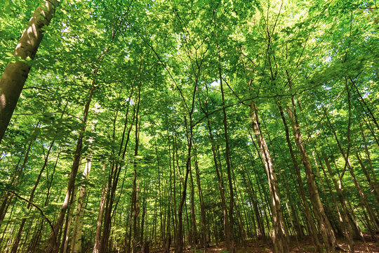 trees and green canopy on sunny day