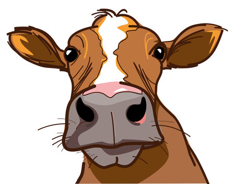 Farm, curious cow looking at you - vector image