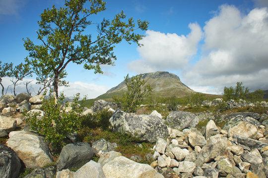 Idyllic mountain view at the Saanatunturi fell and rocks by a dwarf birch in Enontekio, Kilpisjarvi, Finnish Lapland, Finland.