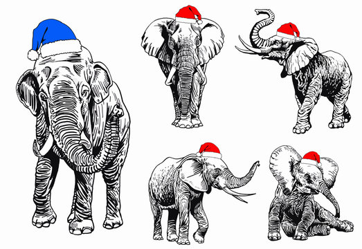 Graphical set of elephants in Santa Claus hats isolated on white background,vector new year illustration