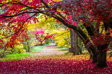 alley in the park with colorful leaves