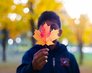 Young boy showing an sugar mate leaf in autumn colour