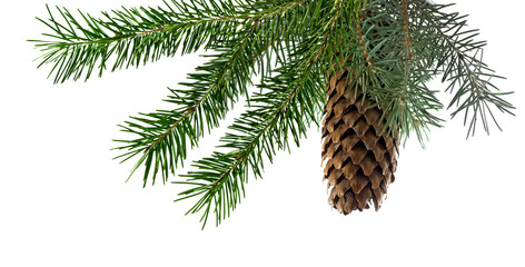 Fototapeta Isolated image of fir branches with a cone on a white background obraz