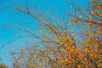 Wild bush with fallen leaves Fotobehang